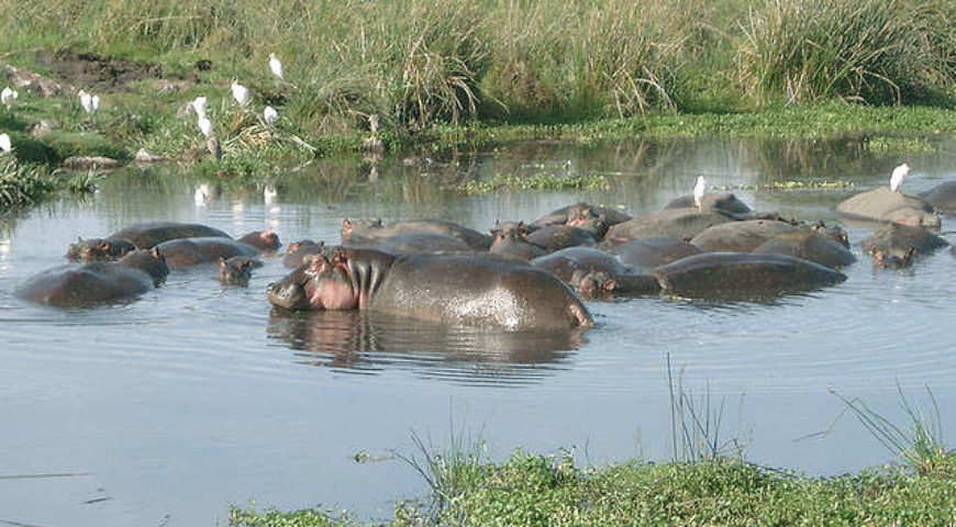 hippos-in-the-crater_640_480