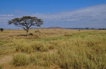 landscape-serengeti-national-park_640_480